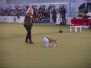 Dortmund Hund -Pferd Main ring Action