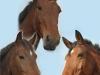 paarden-ding-1