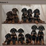 pups-1-a4